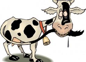 Auf einem Auge ist die Kuh blind