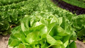 Reize auf den Skat, dann hast du den Salat