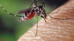Was so eine Mücke für Fett hat